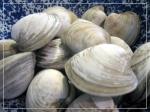 border.clams