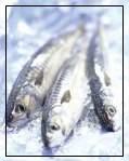 iced_fish