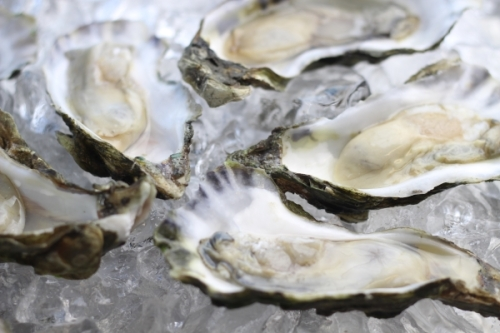ss-logo-oysters-half-shell